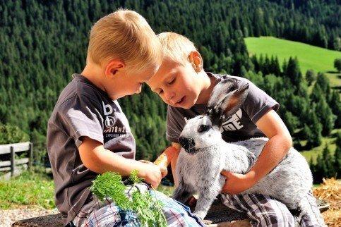 Cavalli Haflinger, pecore, conigli e tanti altri animali