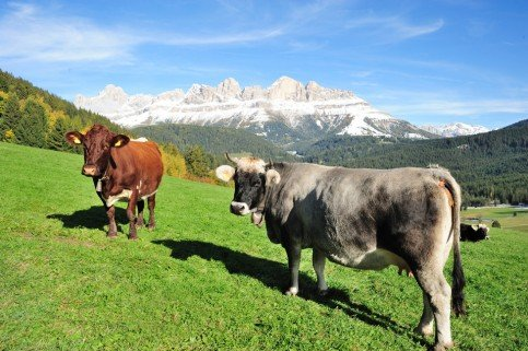 Horses, cattle, rabbits and many other animals – Farm holidays in Val d'Ega